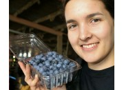 SPRAY FREE BLUEBERRIES  280 Gram Punnet Katikati Grown