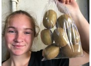 GOLD KIWIFRUIT 1KG Bag Katikati Grown