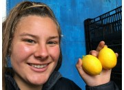 TWO MEYER LEMONS Katikati Grown