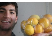 NEW SEASONS MEYER LEMONS 1.3KG Bag Katikati Grown