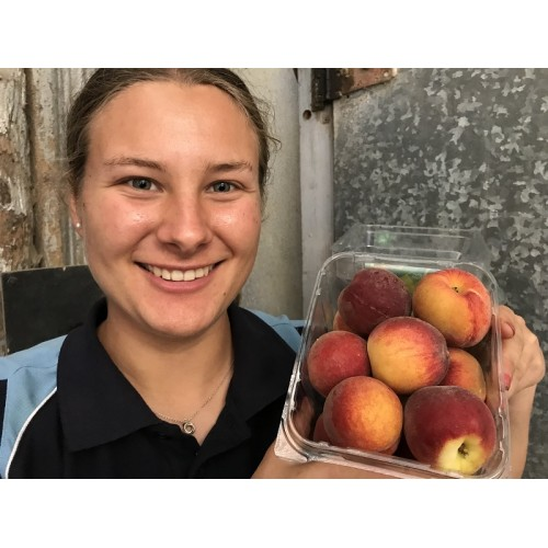 YELLOW FLESH PEACHES 12 Pack  Hawkes Bay Grown