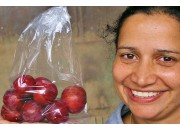 SPRAY FREE BILLINGTON PLUMS 500 Gram Bag Katikati Grown