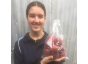 HAWERA PLUMS Katikati Grown 1KG