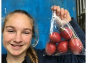 TAMARILLOS  BIG SIZE 5 In Bag  Opotiki Grown