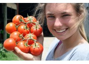 TRUSS TOMATOES  1 KG Bag
