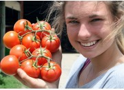 TRUSS TOMATOES  1 KG Bag PUKEKOHE Grown