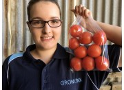 TOMATOES Hot House Medium Size 1KG Pukekohe Grown