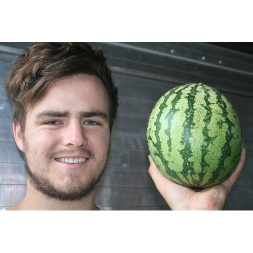 SPRAY FREE WATERMELON Medium Size Katikati Grown