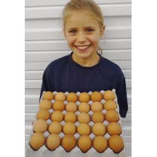 TRAY OF 30 SIZE 7 EGGS FROM THE GREAT COROMANDEL EGG COMPANY
