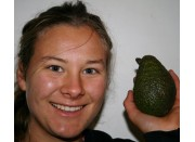 Medium HASS AVOCADOS  Each FIRM Medium Size Katikati Grown