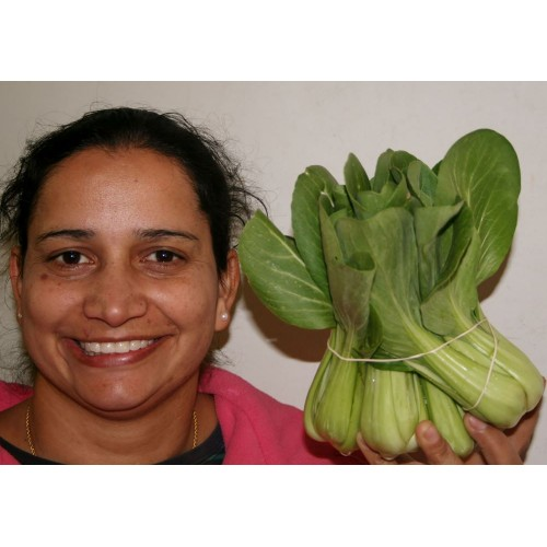 SPRAY FREE BOK CHOY  Per Bunch Katikati Grown