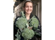 SPRAY FREE BROCCOLI  3 For $3.00 Katikati Grown