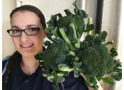 SPRAY FREE BROCCOLI  3 For $4.00 Katikati Grown