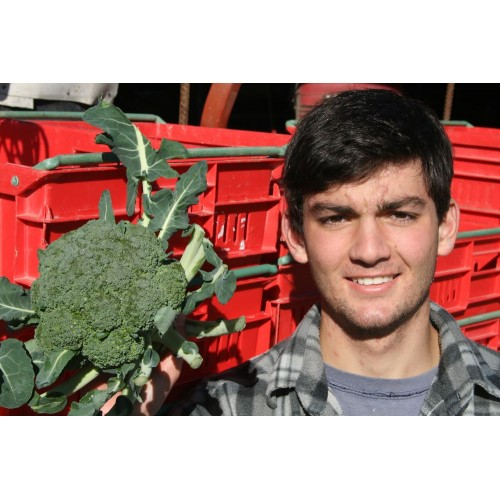 SPRAY FREE BROCCOLI  Each  Katikati Grown