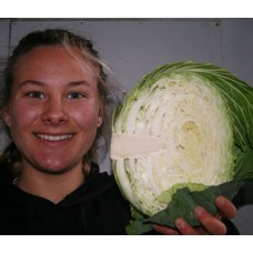 GREEN CABBAGE  Half  Katikati Grown