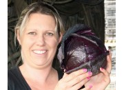 SPRAY FREE RED CABBAGE  Each Palmerston North Grown