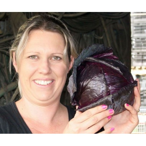 SPRAY FREE RED CABBAGE  Each Pukekohe Grown