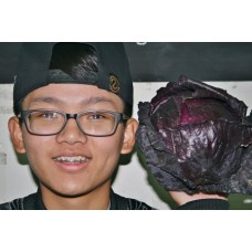 SPRAY FREE RED CABBAGE  Each Katikati Grown
