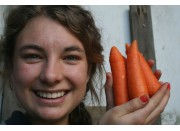 FRESH HARVESTED WASHED SPRING CARROTS  Each  Pukekohe Grown