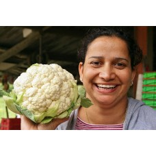 SPRAY FREE CAULIFLOWER  Medium Size  Each Palmerston North Grown