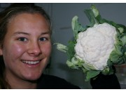 SPRAY FREE CAULIFLOWER Small Size Each Palmerston North Grown