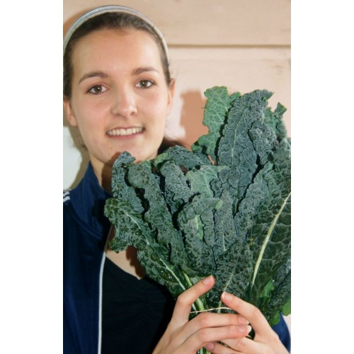 SPRAY FREE CAVOLO NERO  500GRAM Bunch Katikati Grown