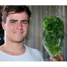CORIANDER  Grown the Hydroponic Way in Katikati
