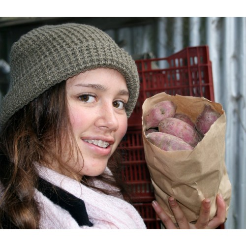 NEW SEASONS SPRAY FREE KUMARA 1.3 KG Bag Small Size Kumara Katikati Grown