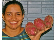 SPRAY FREE KUMARA  1 KG Medium Size Katikati Grown