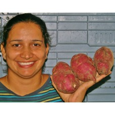 SPRAY FREE KUMARA  1 KG Medium Size Dargaville Grown
