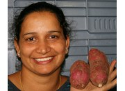 SPRAY FREE KUMARA Medium Size 700 Grams Katikati Grown