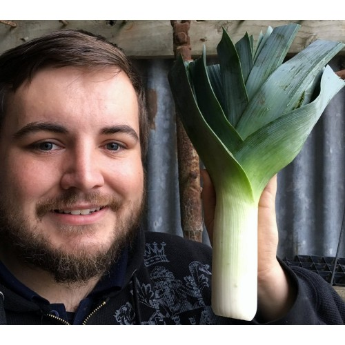 SPRAY FREE LEEKS - Each Katikati Grown