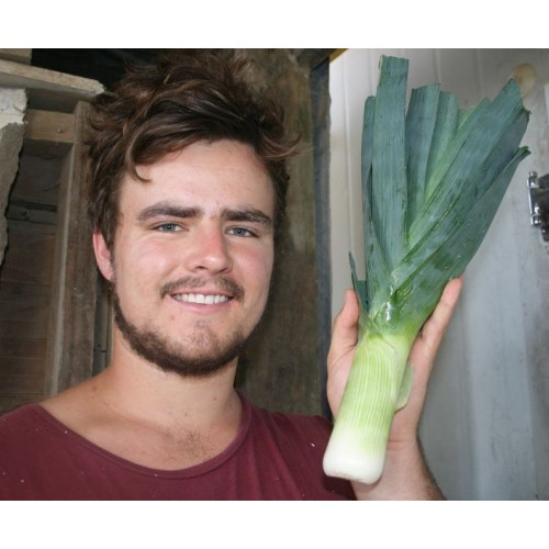 SPRAY FREE LEEK  Each  Katikati Grown