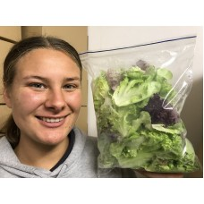 SPRAY FREE HYDROPONICALLY GROWN LETTUCE MIX BAG  200 Gram Katikati Grown