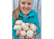 BUTTON MUSHROOMS  250 Gram Bag  Waikato Grown