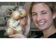 NEW SEASONS BROWN ONIONS  1.1 KG Bag Pukekohe Grown