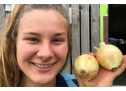 NEW SEASONS TWO MEDIUM SIZE ONIONS  Pukekohe Grown