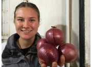 NEW SEASONS RED ONIONS 500 Grams  NZ Grown