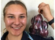 NEW SEASONS RED ONIONS 500 Gram Bag  Pukekohe Grown