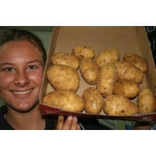 GENUINE NEW SEASONS AGRIA POTATOES  2 KG Bag Pukekohe Grown