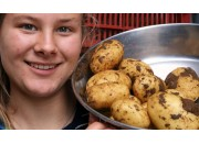 GENUINE NEW SEASONS ILAM HARDY POTATOES 2 KG Bag  Pukekohe Grown