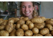 NEW SEASONS MOONLIGHT POTATOES  2 KG Bag Pukekohe Grown