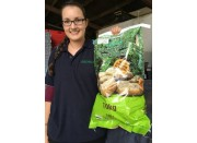 NEW SEASONS MOONLIGHT POTATOES  10 Kilogram Bag Pukekohe Grown