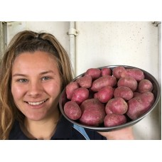 NEW SEASONS WASHED SMALL RED POTATOES  1.5 KG Bag Pukekohe Grown