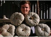 BEST VALUE  5 LARGE CROWN PUMPKINS SPRAY FREE Katikati Grown