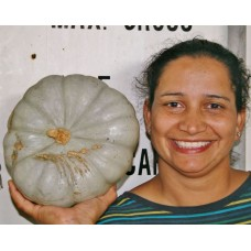BEST VALUE CROWN PUMPKIN SPRAY FREE Medium Size Katikati Grown