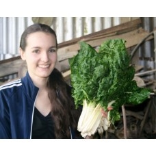 SPRAY FREE SILVERBEET  Bunch Katikati Grown